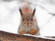 squirrel-posing-in-snow