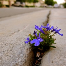 flowers-sidewalk-crack
